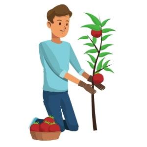 Cultivo de tomate casero